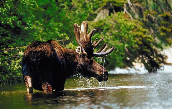 Canada Wildlife Tours