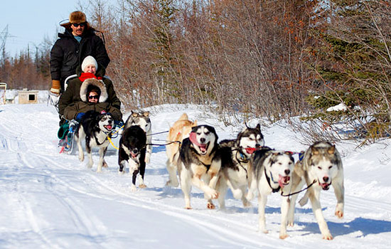 An authentic dogsledding experience - An authentic dogsledding experience
