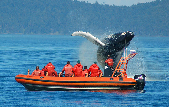 Whalewatching in the Salish Sea - Whalewatching in the Salish Sea