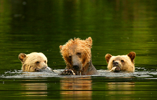 Lords of the Wilderness Bear Viewing Tour