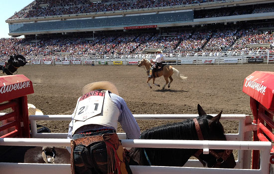 Everyone should go to Calgary Stampede!