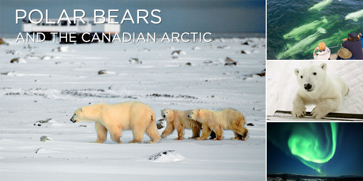 Travel Canada by train to see Polar Bears