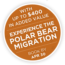 Experience The Polar Bear Migration