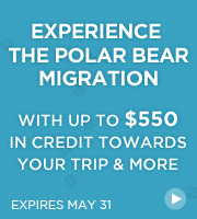Experience the Polar Bear Migration - with up to $550 in credit to use towards your trip and more