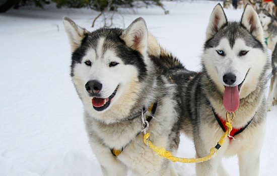 And you'll also get a chance to experience dogsledding & learn about the dogs.