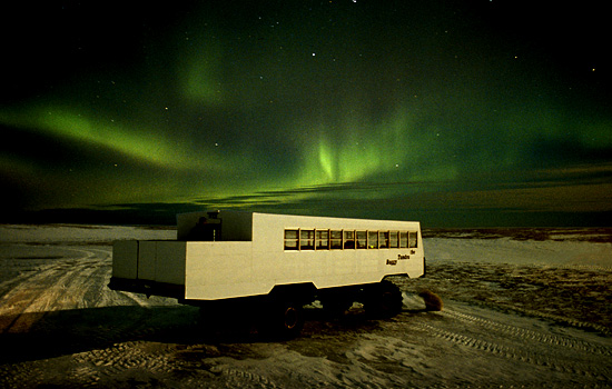 On this safari you sleep in the Tundra Buggy Lodge, surrounded by Churchill Canada polar bears.