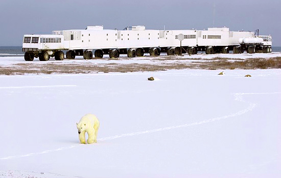 ... of Buggies, made very warm and comfortable for polar bear tours