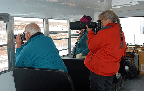 This is a special safari for those who want to bag that perfect shot of Churchill polar bears…